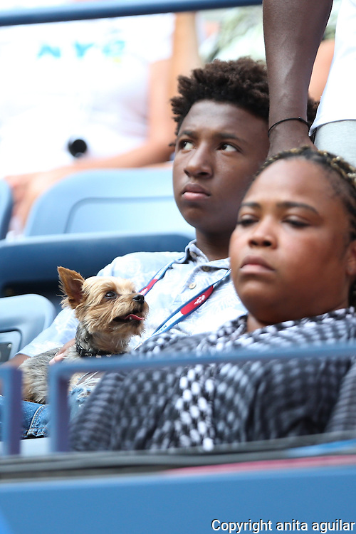 Serena William's dog, Chip, makes an appearance in her box.<br />