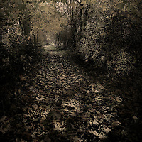A country path in Autumn with falling leaves