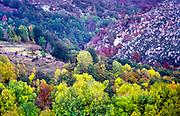 Deciduous trees of many colours autumn landscape, Mont Lozere, Cevennes national park, France