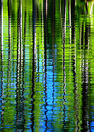 Cypress Gardens Water Abstract