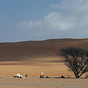 """Oman, Wahiba Sands. January/25/2008...""""Shade under an (Samar) Acadia tree on one of the flat, hard-packed corridors that separates dune from dune provides shelter, and Sultan is soon preparing a traditional Bedouin meal."""""""