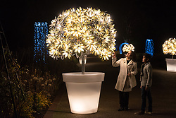© Licensed to London News Pictures. 21/11/2017. London, UK. Visitors view an illuminated flower pot at the opening of Christmas at Kew at Royal Botanical Gardens, Kew. The spectacular displays are illuminated by over one million tiny twinkling lights placed all over Kew Gardens - open Wednesdays – Sundays from 22 November 2017 – 2 January 2017. London, UK. Photo credit: Ray Tang/LNP