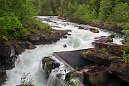 The Spawning Channel at Stamp River Falls in Stamp River Provincial Park near Port Alberni, British Columbia, Canada