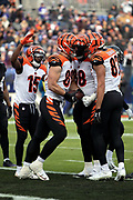 Cincinnati Bengals tight end Matt Lengel (89) celebrates with teammates after catching a 4 yard touchdown pass good for a 14-13 third quarter Bengals lead during the NFL week 11 regular season football game against the Baltimore Ravens on Sunday, Nov. 18, 2018 in Baltimore. The Ravens won the game 24-21. (©Paul Anthony Spinelli)