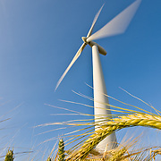 Windy year helps Denmark to produce 42% of its electricity from wind turbines, despite two major windfarms being offline Denmark produced 42% of its electricity from wind turbines last year according to official data, the highest figure yet recorded worldwide.