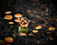 Troll Tending the Mushroom Garden. Image taken with a Nikon D850 camera and 105 mm f/1.4 lens (ISO 200, 105 mm, f/4, 1/125 sec).