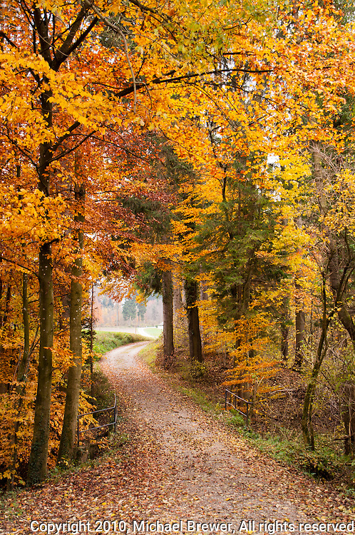 An enchanting wining forest road through a Swiss forest in Autumn.