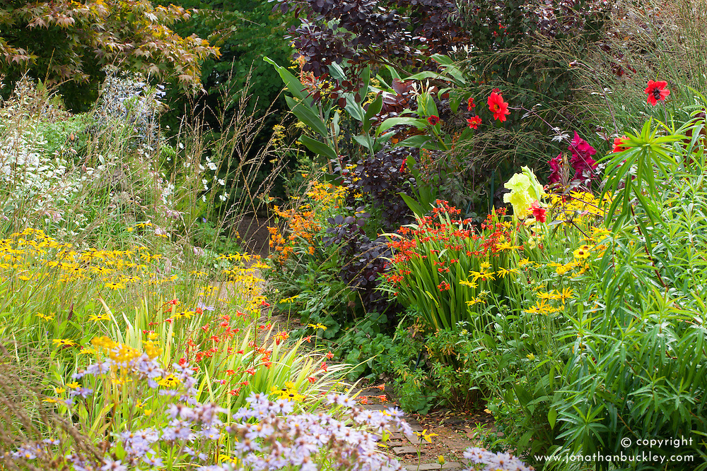 Hot borders at Glebe Cottage. Dahlia 'Bishop of Llandaff', Rudbeckia fulgida var. deamii, crocosmias, gladiolus and Cotinus coggygria Purpureus Group