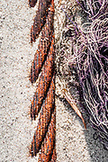 In this image the conformity of strands of richly colored rope contrasts with the white and purple sea grass on the sand background.  The image was processed to emulate Kodak Gold film.