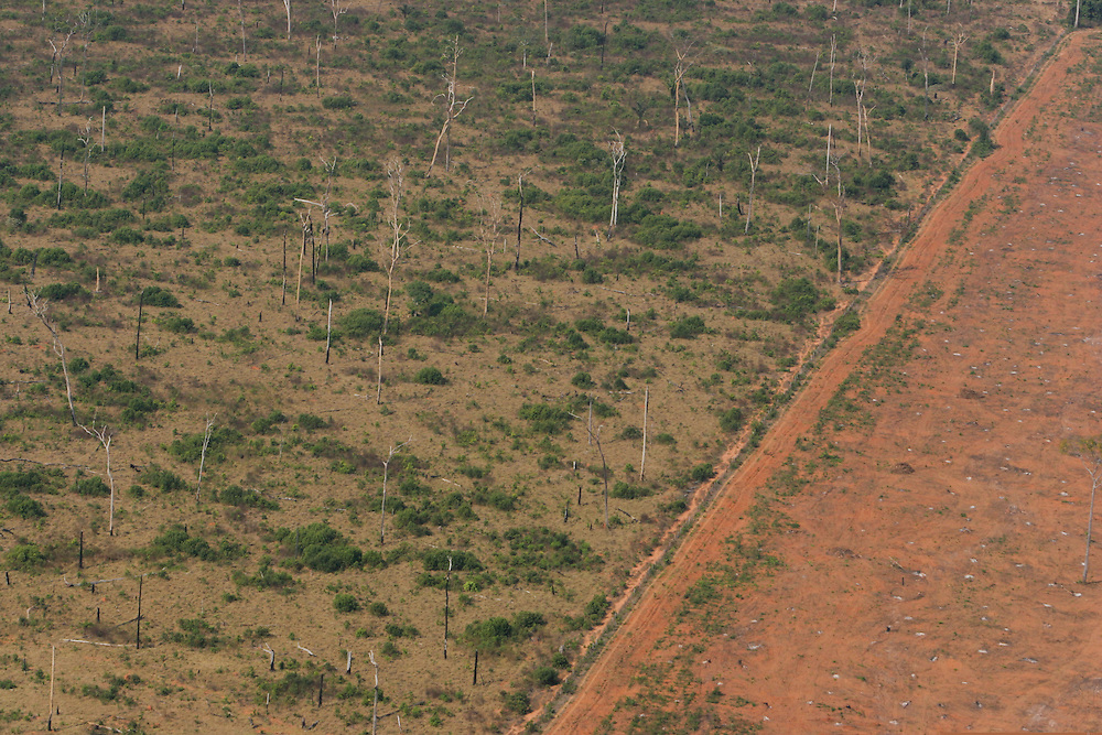 """Aug. 5, 2005: Flight around Sinop andaround the """"Parque das Castanheiras"""" . The Brasilian Nut Tree """"Castanheira"""" is protected in Brasil, but plenty had been logged (some where left alone standing on the soy fields). ©Daniel Beltra"""