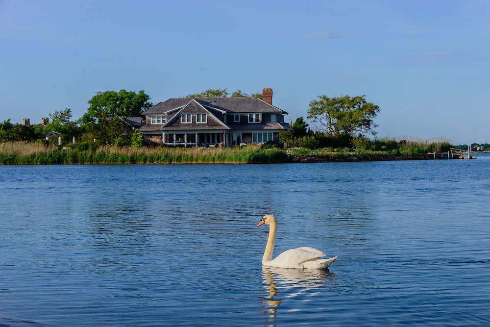 Swan, Mecox Bay, Water MIll, NY