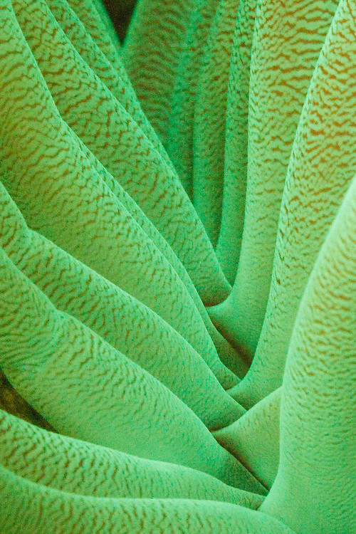 3rd Place Nightsea Fluorescent, Backscatter Digital Shootout, Bonaire 2013.  <br />