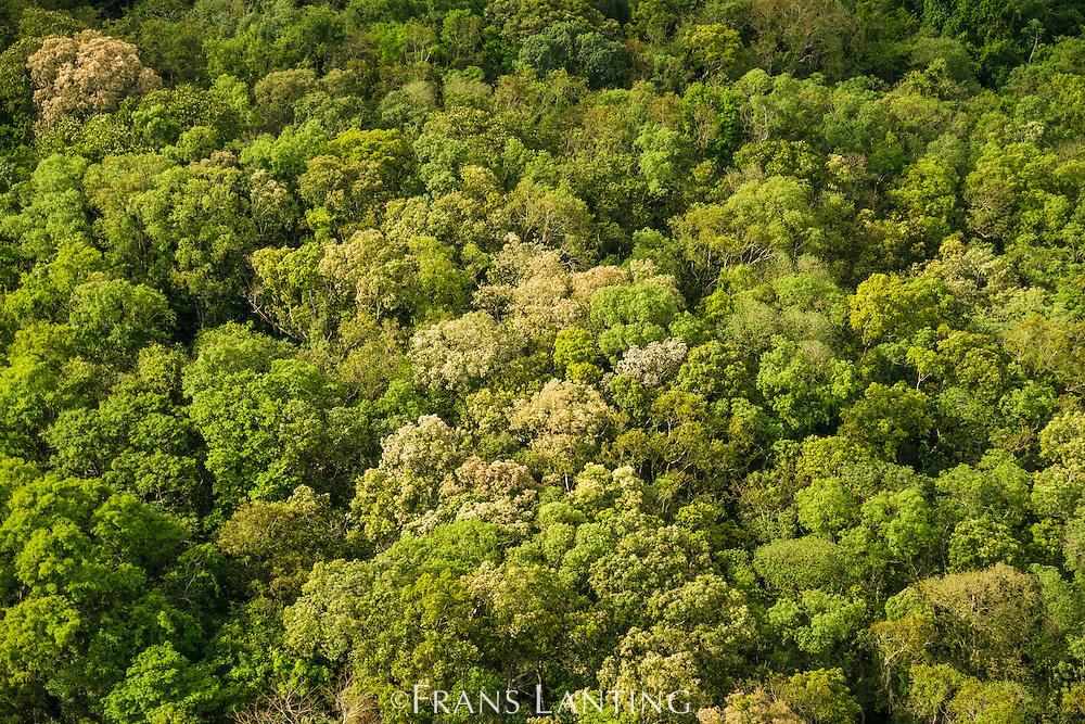 Tropical forest (aerial), Iguacu National Park, Brazil