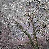 More frosty trees
