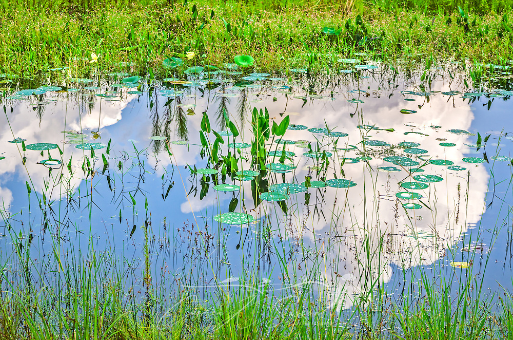 Clouds are reflected in water in the wetlands at Sunset Landing, July 21, 2013, in Tallahassee, Florida. (Photo by Carmen K. Sisson/Cloudybright)
