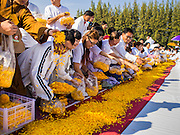 "02 JANUARY 2015 - KHLONG LUANG, PATHUM THANI, THAILAND: People throw marigolds onto the footpath for monks at Wat Phra Dhammakaya at the start of the 4th annual Dhammachai Dhutanaga (a dhutanga is a ""wandering"" and translated as pilgrimage). More than 1,100 monks are participating in a 450 kilometer (280 miles) long pilgrimage, which is going through six provinces in central Thailand. The purpose of the pilgrimage is to pay homage to the Buddha, preserve Buddhist culture, welcome the new year, and ""develop virtuous Buddhist youth leaders."" Wat Phra Dhammakaya is the largest Buddhist temple in Thailand and the center of the Dhammakaya movement, a Buddhist sect founded in the 1970s.   PHOTO BY JACK KURTZ"