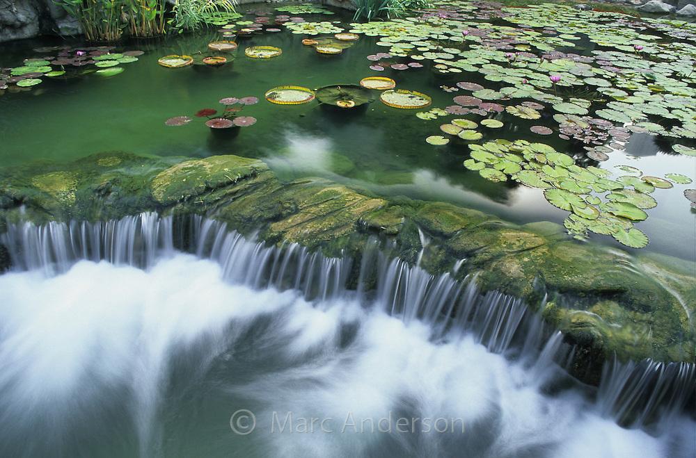 Water lily pads & a cascade in a pond in Hong Kong Park, Hong Kong, China.