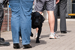 Sniffer dog searches visitors to a prison