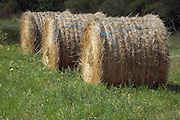 three round bale of hay in fresh growing grass