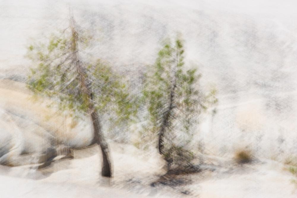 Two Pines, Tenaya Lake, Yosemite National Park, California