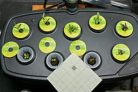 AeroGarden Foyer Bounty Left at 10 days. 1) Cosmos Dwarf Sensation; 2) Cosmos Early Dwarf; 3) Zinnia Thumbelina; 4) Zinnia Lilliput Mix; 5) Marigold Sparky Mix; 6) Blanket Flower; 7) Sweet Alyssum; 8) Coreopsis Lance-leaf; 9) Coreopsis Plains. Image taken with a Leica TL-2 camera and 35 mm f/1.4 lens.