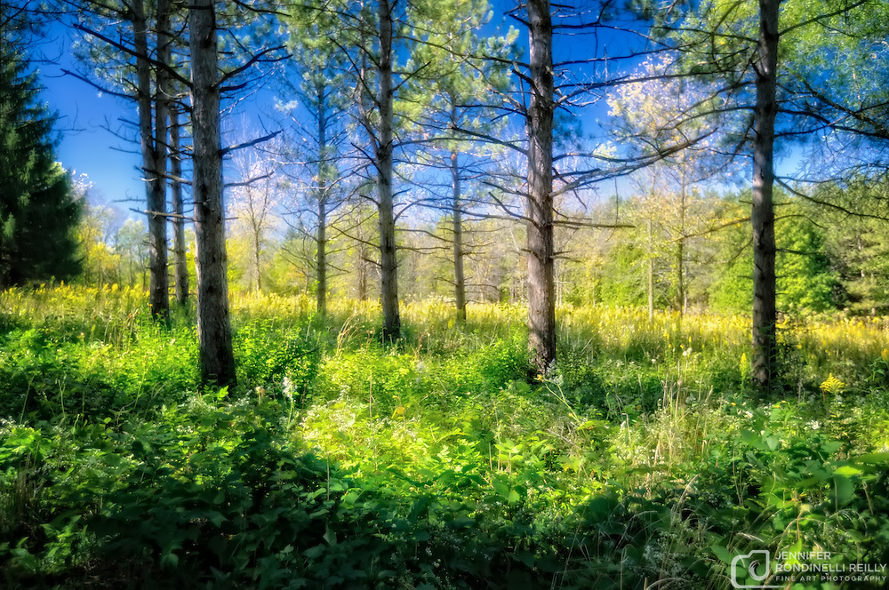 Wisconsin woods - Photo taken at Retzer Nature Center in Waukesha, WI.