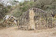 Africa, Tanzania, Lake Eyasi, Hadza tribe. A small tribe of hunter gatherers AKA Hadzabe Tribe. Straw hut under construction The wooden frame is visible