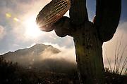 Fog weaves it's way through Tucson Mountain Park in the Sonoran Desert, Tucson, Arizona, USA.
