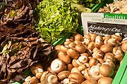 Champignons und Salat aus Bioanbau, Odenwald, Naturpark Bergstraße-Odenwald, Hessen, Deutschland | vegetables, Buchen, Odenwald, Hesse, Germany