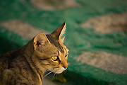 Cat on rocks on Hydra, Greece.