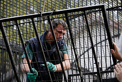 ROMANIA ZARNESTI 25OCT12 - The van and transport cage used to rescue bears from captivity are readied at the Ornesti zoo in northern Romania. The zoo  has been shut down due to non-adherence with EU regulations on the welfare of animals.....jre/Photo by Jiri Rezac / WSPA....© Jiri Rezac 2012