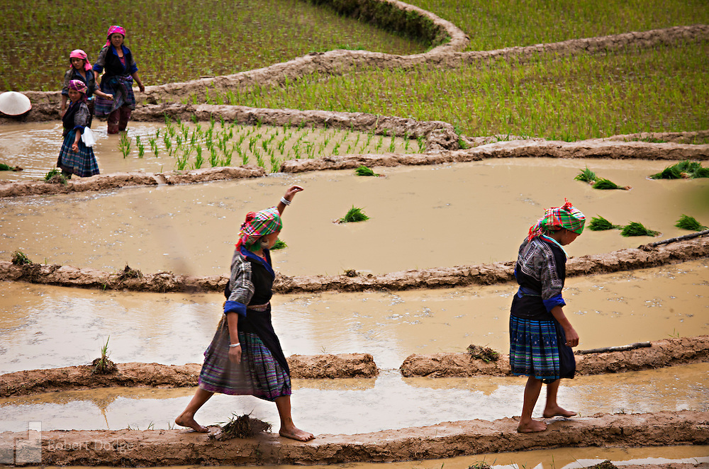 Minority women traverse some rice paddies by walking on the wet and slippery sides. They are taking a break from the hard work of planting rice seedlings. Robert Dodge, a Washington DC photographer and writer, has been working on his Vietnam Unexpected project since 2005. The project has taken him throughout Vietnam, including Hanoi, Ho Chi Minh City (Saigon), Nha Trang, Mue Nie, Phan Thiet, the Mekong, Sapa, Ninh Binh and the Perfume Pagoda. His images capture scenes and people from women in conical hats planting rice along the Red River in the north to men and women working in the floating markets one the Mekong River and its tributaries. Robert's project also captures the traditions of ancient Asia in the rural markets, Buddhist Monasteries and the celebrations around Tet, the Lunar New Year. Also to be found are images of the emerging modern Vietnam, such as young people eating and drinking and embracing the fashions and music of the west. Robert Dodge, a Washington DC photographer and writer, has been working on his Vietnam Unexpected project since 2005. The project has taken him throughout Vietnam, including Hanoi, Ho Chi Minh City (Saigon), Nha Trang, Mue Nie, Phan Thiet, the Mekong, Sapa, Ninh Binh and the Perfume Pagoda. His images capture scenes and people from women in conical hats planting rice along the Red River in the north to men and women working in the floating markets one the Mekong River and its tributaries. Robert's project also captures the traditions of ancient Asia in the rural markets, Buddhist Monasteries and the celebrations around Tet, the Lunar New Year. Also to be found are images of the emerging modern Vietnam, such as young people eating and drinking and embracing the fashions and music of the West.
