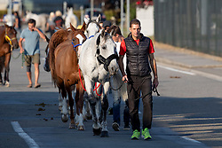 Team France<br /> Departure horses from Liege Airport<br /> FEI World Equestrian Games™ Tryon 2018<br /> © Hippo Foto - Dirk Caremans<br /> 01/09/2018