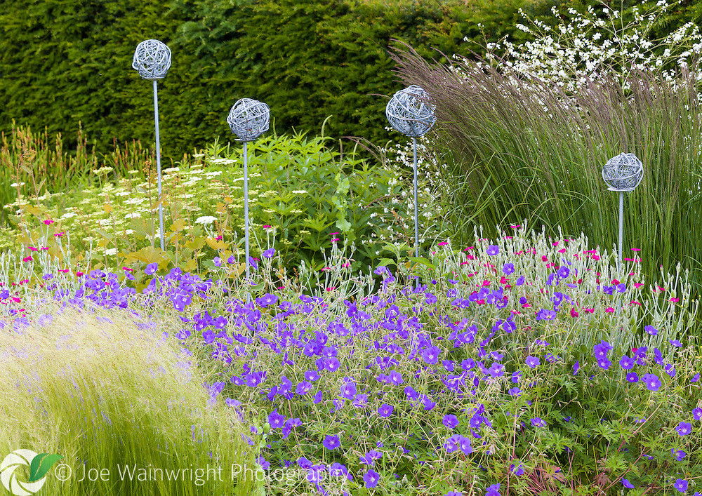 Geraniums, lychnis, alliums and penstemons are among the many plants in a border at Bluebell Cottage Gardens, Cheshire - photographed in June.