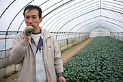 Signs of recovery in Miyagi Prefecture, Japan on 01 Dec., 2011. .Photographer: Robert GilhoolyYoshikazu Kato, CEO and founder of Butai Farm, tries some komatsuna vegetable inside a company greenhouse  in Sendai, Japan on December 01, 2011.  The company was established as Butai Farm in 2003 with the idea of developing a company that would work on the whole farming process -- from production to processing, distribution, and sales. The March 11 tsunami flooded about 60% of the company's 40-hectare farmland. While working toward the reconstruction of the land, they have also introduced a three-tier radiation testing system in an attempt to recover consumer confidence..Photographer: Robert Gilhooly