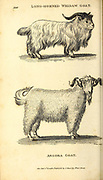 Goats from General zoology, or, Systematic natural history Vol II Part 2 Mammalia, by Shaw, George, 1751-1813; Stephens, James Francis, 1792-1853; Heath, Charles, 1785-1848, engraver; Griffith, Mrs., engraver; Chappelow. Copperplate Printed in London in 1801 by G. Kearsley