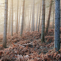 Trees with early morning sunlight and mist