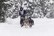 Musher Bill Kornmuller competing in the Fur Rendezvous World Sled Dog Championships at Goose Lake in Anchorage in Southcentral Alaska. Winter. Afternoon.