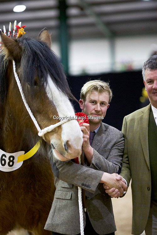 Richard &amp; Robert Bedford's HARTCLIFF RIHANNA  f 2011 (No. 68)<br />