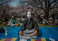 Records of the blossoming of Japan's cherry trees, o-hanami, the harbinger of spring, go back 1,200 years to its former capital, Kyoto.  As it turns out, the opening of temperature-dependent cherry blossoms, over the centuries has provide a long record of springtime temperatures in Japan.  Blossoming times had fluctuated on average between the 12th to the 18th of April until the early 20th century - late by present standards.  Beginning in the mid- 20th century, the date the blossoms opening has steadily moved, on average, closer to the beginning of April and that trend continues to this day because of global warming.  A Japanese-American team of research measured a 1.8C (3.24F) change in the average temperature for February &amp; March at Mt. Takao, near Tokyo, between 1980 to 2005.  Cherry trees bloom 5 1/2 days earlier, as a consequence. <br /> <br /> Tokyo man dressed as an traditional actor at the o-hanami (&quot;flower viewing&quot;) in Yoyogi Park.  Tokyo, Japan.