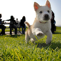 Puppy plays at the park.