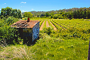 Southern France, Congenies, Vineyard, Aged Shed