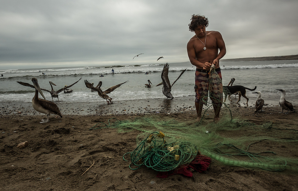 HUANCHACO, PERU - JULY 14, 2014: Joel Uca&ntilde;an Arzola, 24, removes fish from his nets after going to get them in his caballito boat. Uca&ntilde;an is also a local longboard surf champion and runs a surf school with three of his brothers. Going to sea in small reed boats has become almost entirely an old man&rsquo;s occupation: the sons and grandsons of the local fishermen are becoming surfing instructors, construction workers and policemen, taking jobs on larger fishing boats or going abroad in search of better pay. <br /> &ldquo;It seems like we&rsquo;re the last generation,&rdquo; said Luis Urcia, who at 30 is one of the youngest of the fishermen who go out regularly on the caballitos. &ldquo;A fisherman&rsquo;s life is tough that&rsquo;s why the young people don&rsquo;t want to do it. They&rsquo;d rather have a profession and health insurance and a bank account.&rdquo;<br />   PHOTO: Meridith Kohut for The New York Times