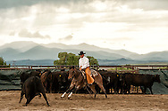 Cutting horses, cowboys, Quarter Horse, Whitehall, Montana