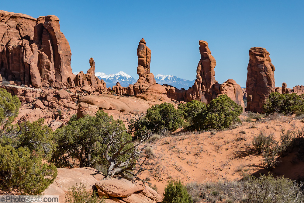 La Sal Mountains rise behind the Marching Men, along Tower Arch Trail to Klondike Bluffs, in Arches National Park, Moab, Utah, USA.