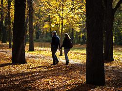 THEMENBILD - Herbst im Wiener Prater. Das Bild wurde am 27. Oktober 2013 aufgenommen. im Bild Paar spaziert eine Allee entlang // THEMES PICTURE - Autumn at Prater in Vienna. The image was taken on october, 27th, 2013. Picture shows Couple walking along an Alley , AUT, EXPA Pictures © 2013, PhotoCredit: EXPA/ Michael Gruber
