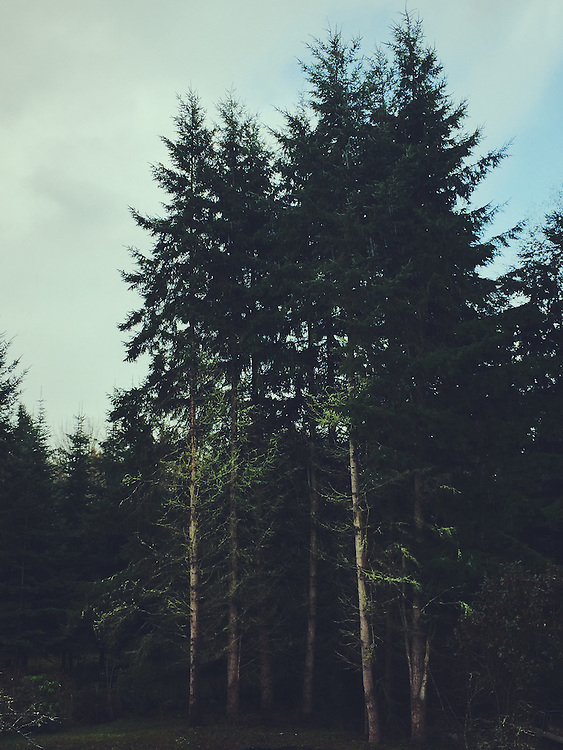 Hiking in the Pacific Northwest outside of Seattle, Washington.