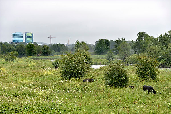 Nederland, Arnhem, 9-7-2014Dit gebied ten zuiden van de rijn, meinerswijk, is een groot natuur en recreatiegebied. Ook wordt het gebruikt en aangepast met een geul, nevengeul, om bij hoogwater het water uit de rivier beter te laten doorstromen, afvoeren. Room, space for the river. Prevent the river from flooding. Reducing the level, waterlevel,the,netherlands,holland,rhine,measures.FOTO: FLIP FRANSSEN/ HOLLANDSE HOOGTE