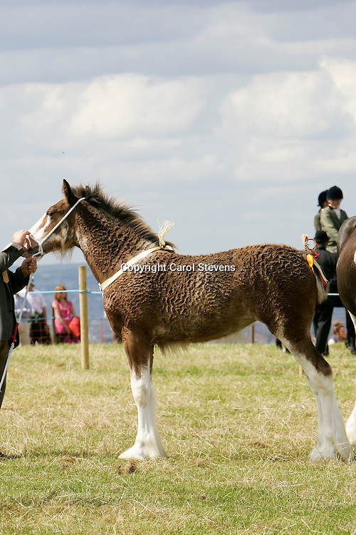 Emley Show 2012<br />