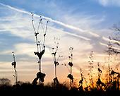 Grassland Profiles